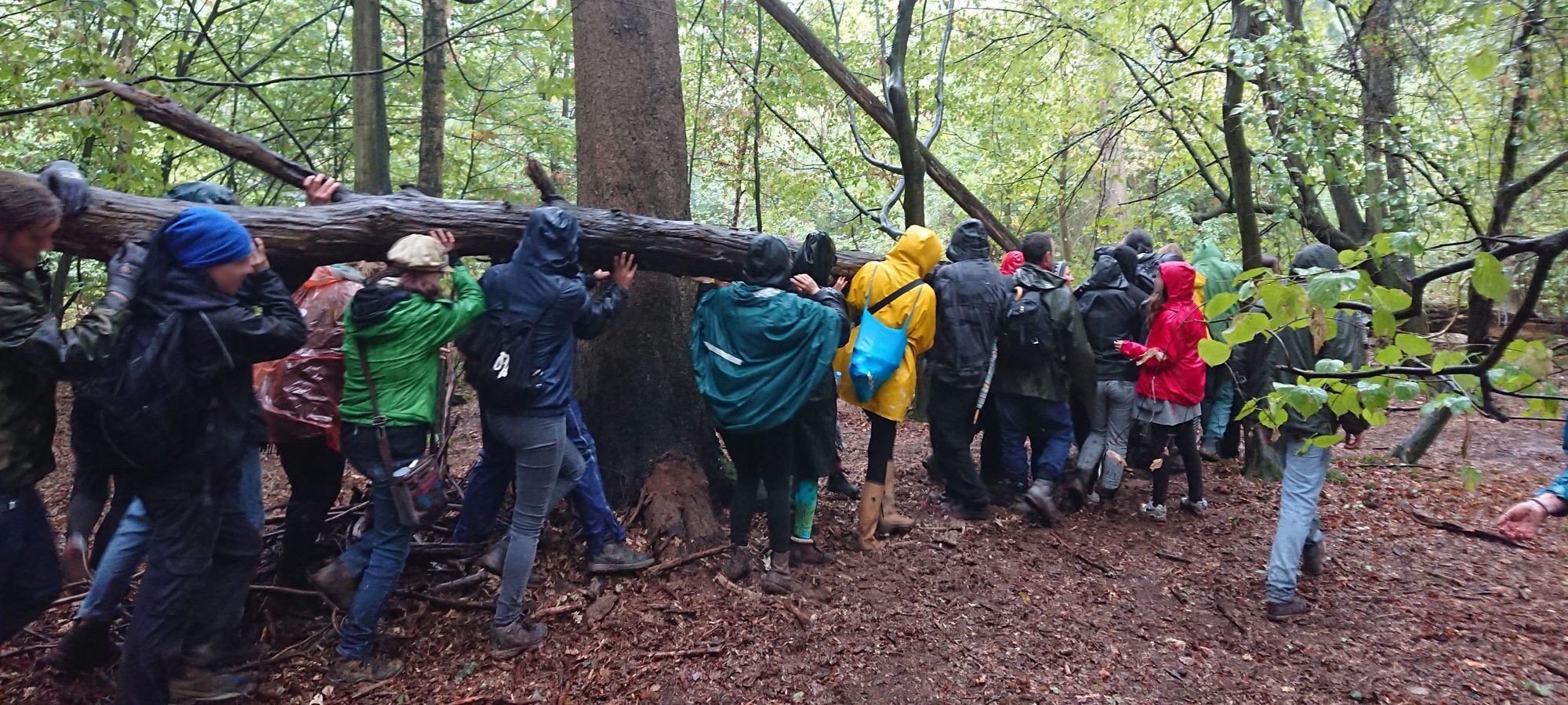 Aktion im Hambacher Forst am 23.09.2018
